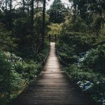 Ecotourism in Nallamala forest