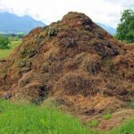 Animal Manure: What They are and How They are Used