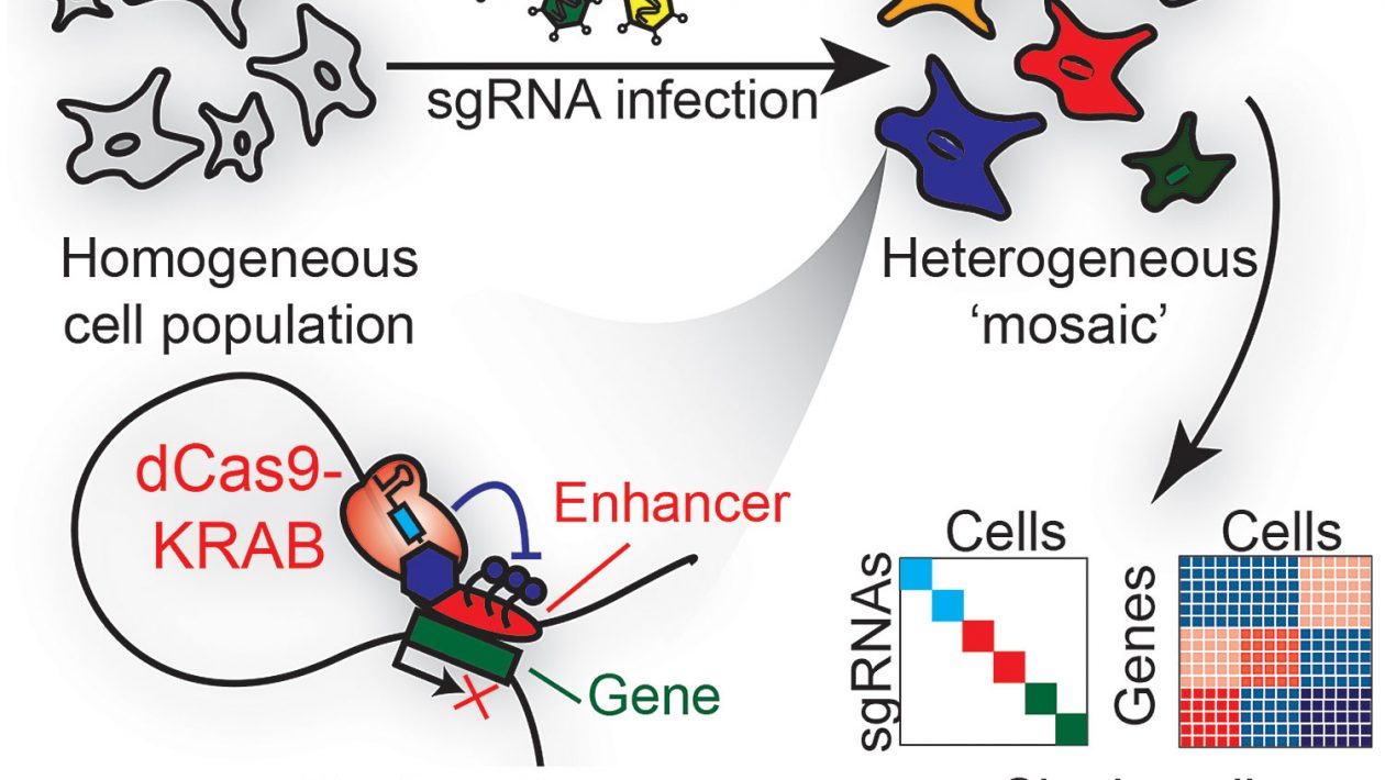 Single cell RNA-seq analysis