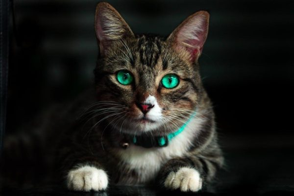 10 Interesting Facts about Cats You Might Not Know