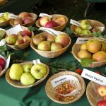 Apple Varieties to Try and the Health Benefits to Avail