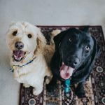 Pampering the Pooch and Shop for Dog Supplies Online