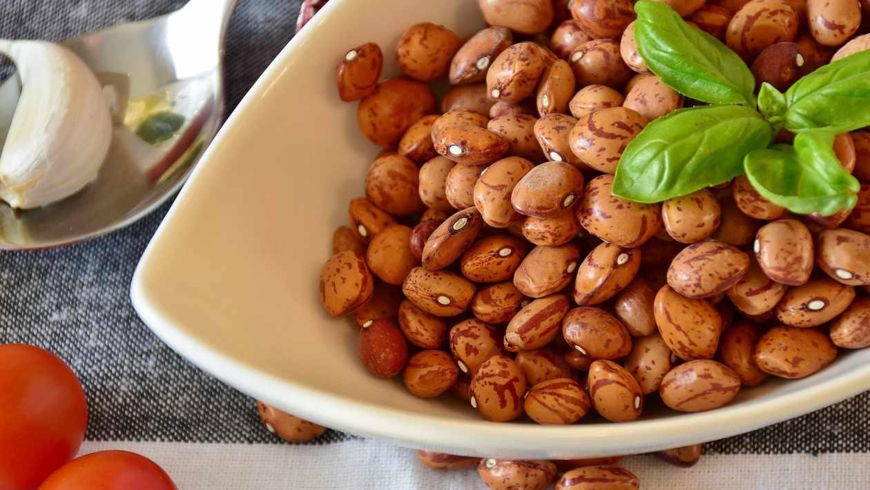 High protein beans